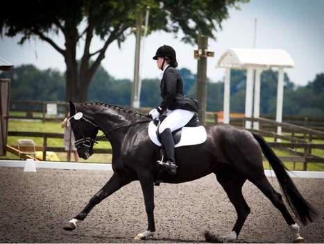 Florida Horse Park gets $2 million in State budget to spur development | Horses | Scoop.it