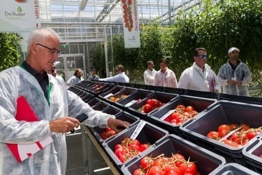 Innovation clear in glasshouse tour - The Land Newspaper | Sensory Marketing of foods | Scoop.it