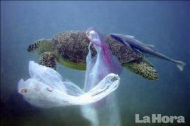 La basura afecta a los animales marinos : Planeta : La Hora Noticias de Ecuador, sus provincias y el mundo | temas ambientales | Scoop.it
