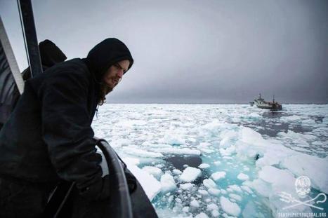 Sea Shepherd : Face à face risqué avec les braconniers de légine #antarctique | Arctique et Antarctique | Scoop.it