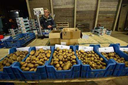 Dutch saltwater potatoes offer hope for world's hungry | Gourmet Traveler | Scoop.it