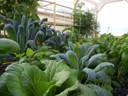 Aquaponics in Cold Climates? How Does That Work? | Aquaponics World View | Scoop.it