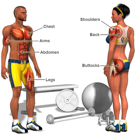 Starting out? This is how to effectively Build Muscle | Focus T25 Reviews | Scoop.it