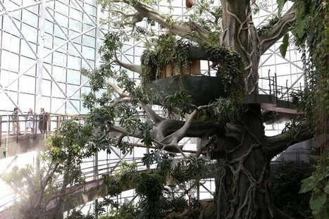 A taste of tropical in Dubai as indoor rainforest opens | The National | Sustainable Real Estate | Scoop.it