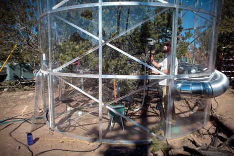 Los Alamos National Laboratory Studies Tree Deaths | Sustain Our Earth | Agua | Scoop.it