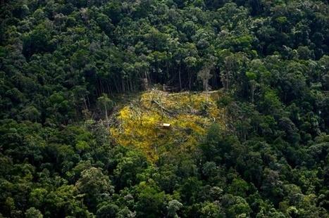 18 millions hectares de forêts ont disparu en 2014 | SandyPims | Scoop.it