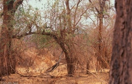 ¿Eres capaz de encontrar a estos veinte animales camuflados en la naturaleza? | INICIATIVA EMPRENDEDORA | Scoop.it