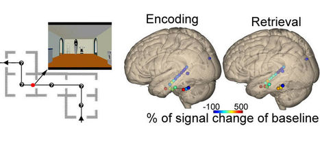 How We Know Where We Are | Social Neuroscience Advances | Scoop.it