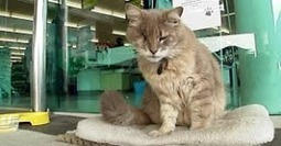 Diesel The Cat is A New Zealand Supermarket Mascot | Catnip Daily | Scoop.it