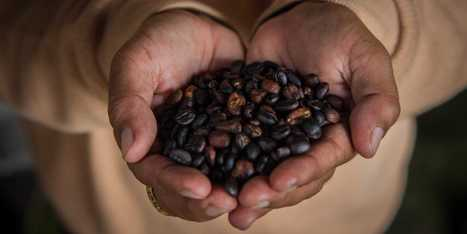 The Complete History Of Coffee [Infographic] - Business Insider | Coffee Lovers | Scoop.it