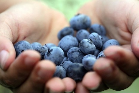 It's National Blueberry Month, Enjoy! | Healthy Living | Scoop.it