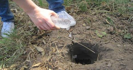 Noticias de ecologia y medio ambiente | Un invento mexicano podría solucionar la crisis por sequía | Agua | Scoop.it