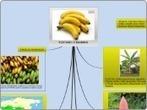 PLÁTANO O BANANO (MUSA CAVENDISHII) - Mind Map | Platano-Banana (Musa Cavendishii) | Scoop.it