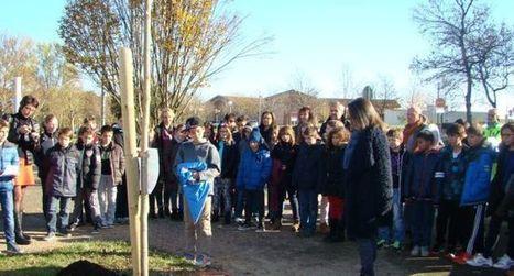 Les écoliers plantent un acacia pour  soutenir la COP 21   Escalquens infos   Scoop.it