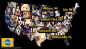 Bunny's Blog: Thousands of Dog Lovers Shine a Spotlight on Their Communities | Pet News | Scoop.it