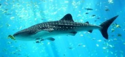 Adventurous Pursuits in Ningaloo Reef | travel | Scoop.it