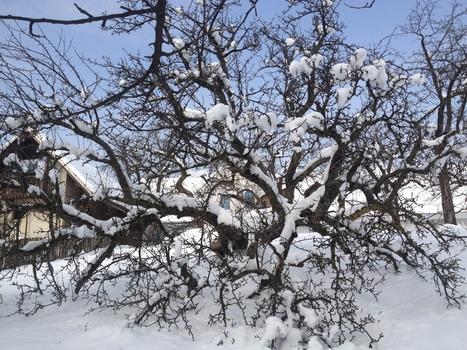 Padel pod snegom | Družinski časopis | Scoop.it