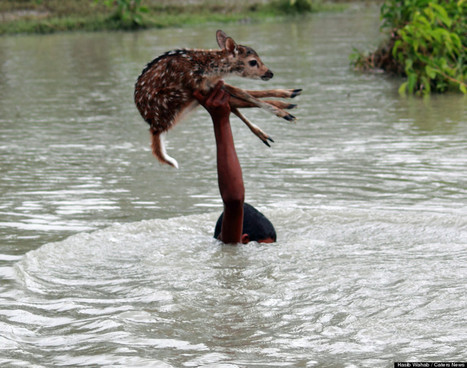 Courageous Teen Risks His Life To Save Drowning Baby Deer   That's interesting!   Scoop.it