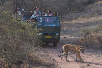 Ranthambore Tiger Reserve: Wildlife Lover's Favorite | Ranthambore National Park | Scoop.it