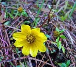 AutumnRamble | Native Plants | Scoop.it