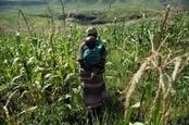 Afrique : Nouveau programme de l'UE visant à améliorer la gouvernance foncière | Questions de développement ... | Scoop.it