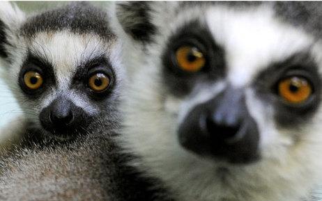 Chassés pour leur viande, ces animaux sont désormais menacés d'extinction | Protection animale | Scoop.it