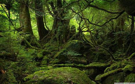 3.8 Billion Years of Wisdom: Intelligence in Nature (1 hr) | Science Fiction Golden | Scoop.it