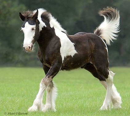 Amazing Pictures of Horses   Horse Industry News   Scoop.it