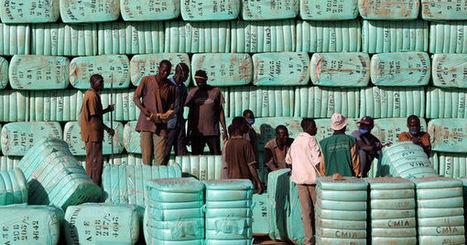 Burkina Faso: les leçons à tirer de la fin du coton transgénique | Economie Responsable et Consommation Collaborative | Scoop.it
