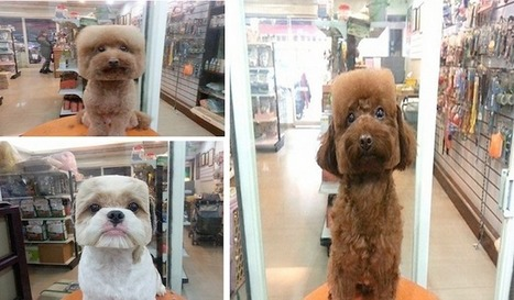 Square-Shapped Hairstyle is the Latest Trend for Dogs in Taiwan   Le It e Amo ✪   Scoop.it