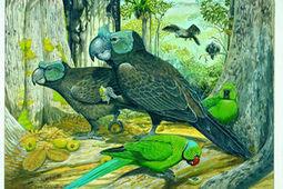 Cranky Parrots? Weird Island Animals Described in Long-Lost Report | All Things Zygodactyl | Scoop.it