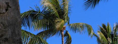 Paradise Jamaica Villas | Cottages Overview - PARADISE VILLA SUR MER | Scoop.it