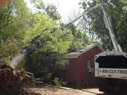 Excellent Tree Care Service in Arlington TN by Cross Roads Tree Service | Cross Roads Tree Service | Scoop.it