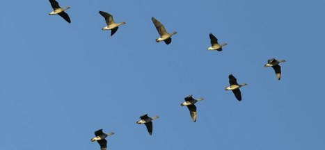 6 Steps For Ensuring Leadership Alignment | Management - Leadership | Scoop.it