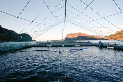 Mission - Global Salmon Initiative | Aquaculture | Scoop.it