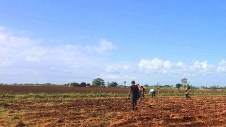 Worker exploitation on Queensland farms to be examined in parliamentary inquiry | Farm Safety | Scoop.it