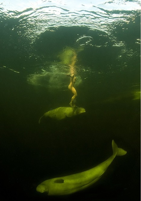 Nue, elle nage dans l'eau glaciale avec des bélugas | Mais n'importe quoi ! | Scoop.it
