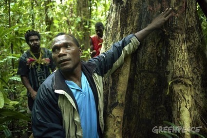Ecoforestry in Papua New Guinea | Mixed Farming, Sustainable Agriculture, Food Security | Scoop.it