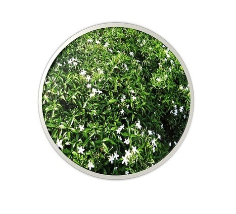 Flower plant Manufacturers and suppliers from Farrukhabad (U.P.) | sachin nursery | Scoop.it