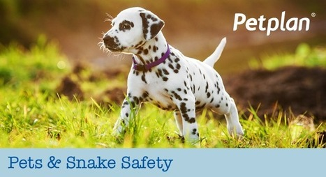 Pets & Snake Safety | Petplan Blog | Pet Insurance | Scoop.it