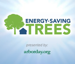 I am Planting a Free Tree to Save on Utility Bills - Get Yours | Forest Keepers Tree news | Scoop.it