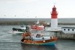 Enezgreen - Actualité légale - Les pêcheurs bretons cherchent à développer des chaluts plus sélectifs   Equipements durables sports outdoor   Scoop.it