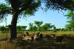 ICRAF at GLF: Boosting landscape restoration with agroforestry | Ecosystèmes Tropicaux | Scoop.it