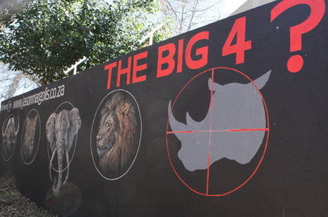South African park considers rhino evacuation | GarryRogers Biosphere News | Scoop.it