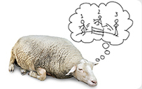 Counting Sheep: The Science of Sleep | With My Right Brain | Scoop.it