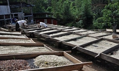 Can coffee stimulate renewable energy in Central America? | Coffee News | Scoop.it