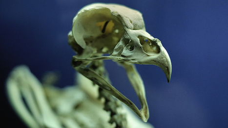 What is the evolutionary advantage of death? | Science, History, Weird or Funny Facts | Scoop.it