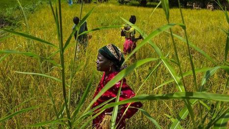 L'Afrique, premier continent concerné par les transactions foncières massives | Postcolonial | Scoop.it