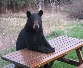 Change Management, Goldilocks and the Three Bears ... | change management | Scoop.it