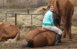 Make Quality Time, Not Quantity Of Time, For Your Horse   The Natural Horse   Scoop.it